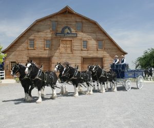 Express Clydesdales Barn